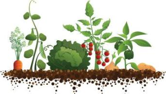 xno-till-gardening-vegetables.jpg.pagespeed.ic.xiuG30bZyX